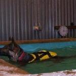 Shiva tränas i bassäng