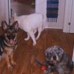 Hundkompisar