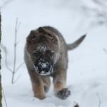 Snöfräsarn Indra