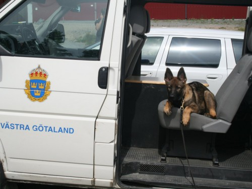Ett riktigt polishundsämne