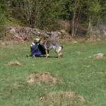 H. Örnie undersöker släden
