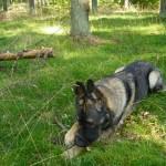 En lugn skön dag i skogen tycker Izac