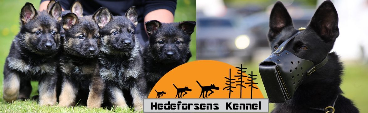 Hedeforsens Kennel